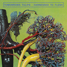Tomorrows Tulips – harnessed to flesh