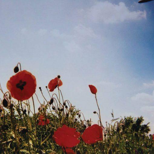 Fluisteraars - bloem